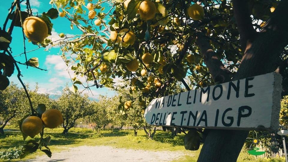 """""""Scent of Zagara"""": dall'Etna alla Conca d'oro il travel video del Distretto Agrumi per il rilancio turistico della Sicilia"""