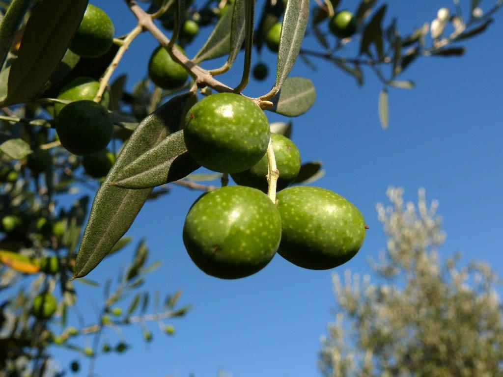 """Cassaro: l'olio e.v.o. Cunzatillu conquista il Premio """"Grande Olio Slow"""" di Slow Food"""