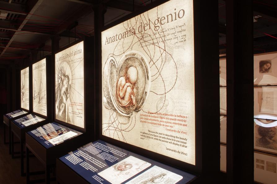 anatomiabaja-1579710321.jpg